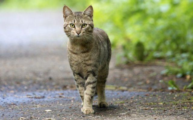 Коты не приживаются в доме - причины и что делать
