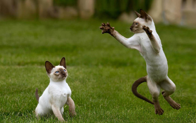Взрослая кошка не любит играть: почему и что делать