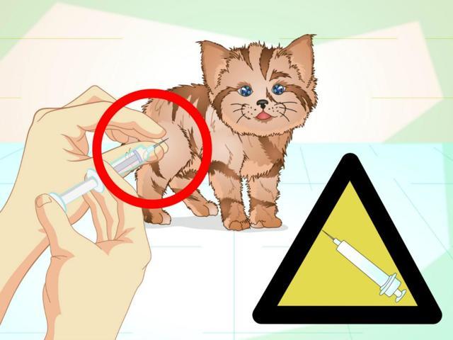 Саркома у кошек - симптомы, лечение, причины