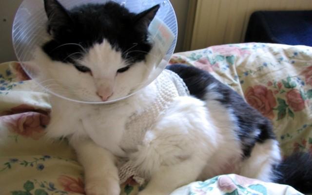 Кот постоянно чешется и вылизывается - причины и что делать