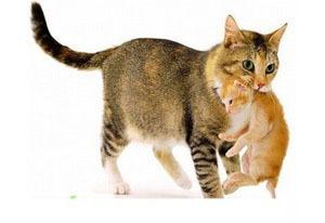 Кошка несет котенка в зубах в другое место - причины