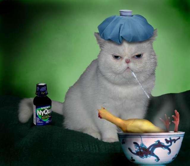 У кота кровь изо рта - причины и лечение