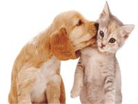 Пивные дрожжи для кошек - можно ли давать