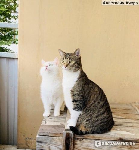 Мелоксикам для кошек - инструкция по применению, дозировка