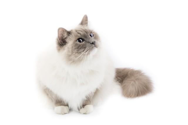 6 причин гидронефроза почек у кошек: что делать
