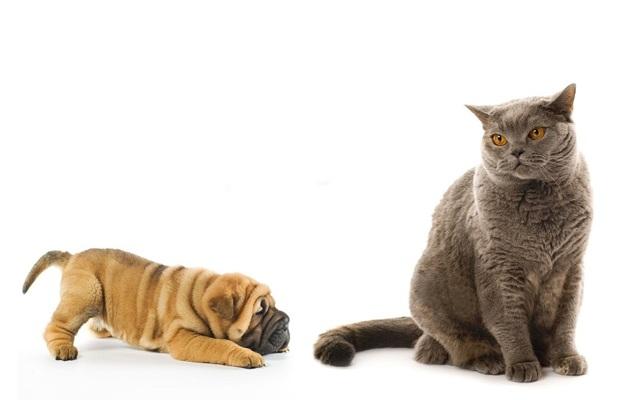 Как отучить кота драть обои - методы отучения
