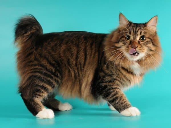 Откуда появились кошки на земле