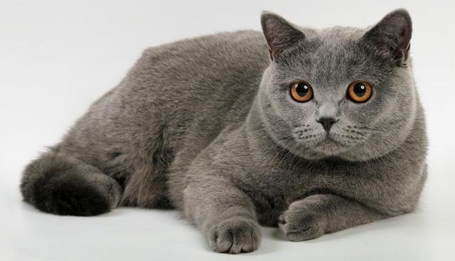 Как подстричь кошку в домашних условиях?