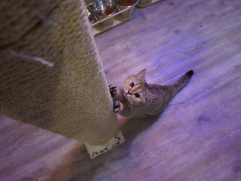 Адаптация кота к новому дому: что делать и как помочь
