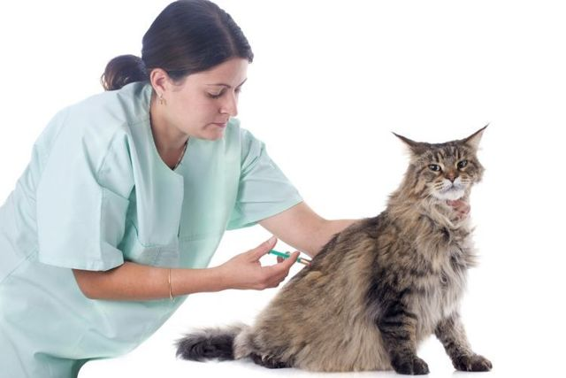 Гемобаланс для кошек – инструкция применению