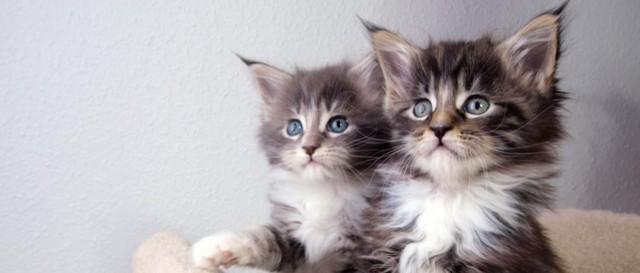 Когда котята начинают ходить: в каком возрасте