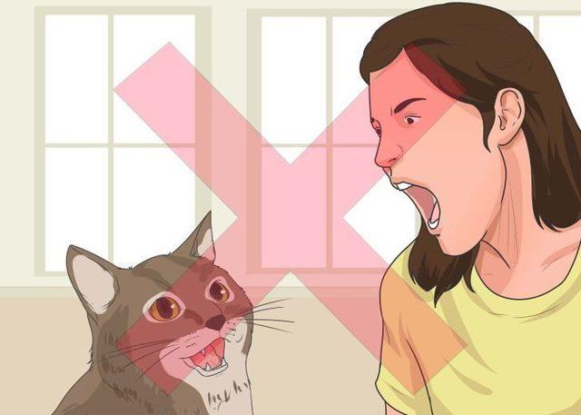 Котенок ест наполнитель для туалета - что делать