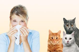 Цетрин кошке при аллергии - можно ли давать