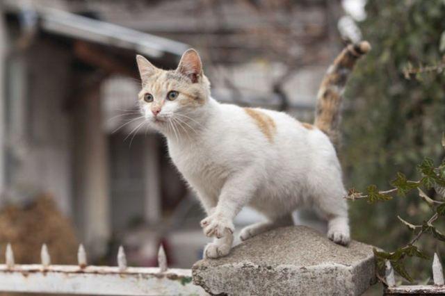 Асцит у кошек - симптомы и лечение