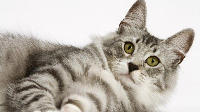 Как часто можно вязать кошку?