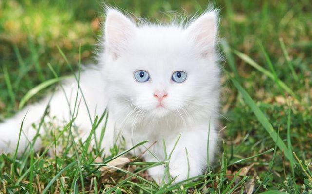 Как назвать котенка мальчика - красивые имена