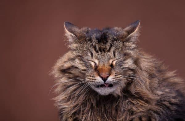 Застряла кость в горле у кошки: что делать