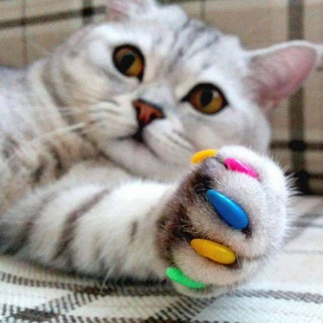 Кот дерет обои - что делать