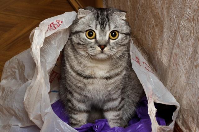 4 причины почему коты любят коробки