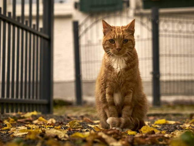 4 причин жирной шерсти у кота - как лечить