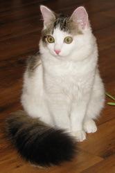 Чем лечить ринотрахеит у кошек - способы лечения
