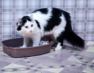 Гастроэнтерит у кошек: что делать