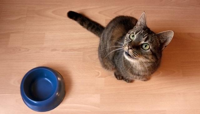 Почему у кошки сухой кал