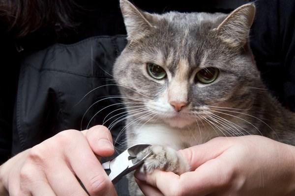Как правильно подстричь когти кошке в домашних условиях