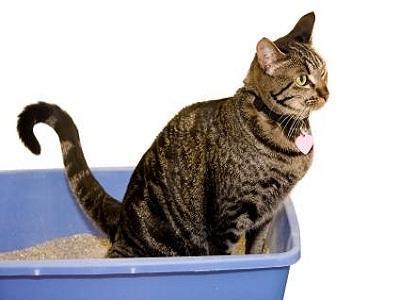 У кота понос и рвота - что делать в домашних условиях
