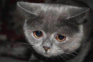 Кот не ходит в туалет по большому 3 дня