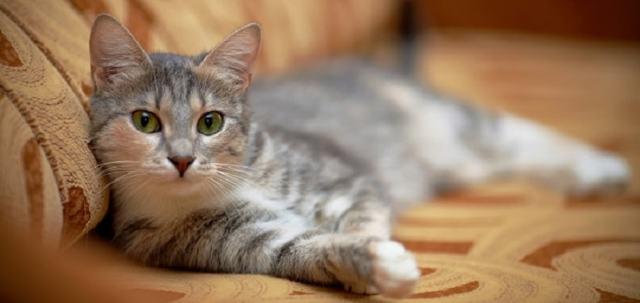 Почему кошка чихает часто - что делать и чем лечить