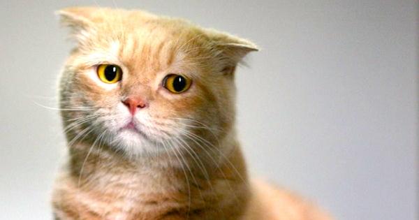 У котенка выпал зуб - когда происходит смена зубов