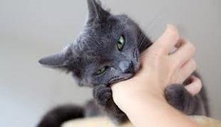 Последствия укуса кошки - возможные осложнения