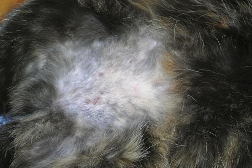 12 причин почему кошка лижет свою лапу