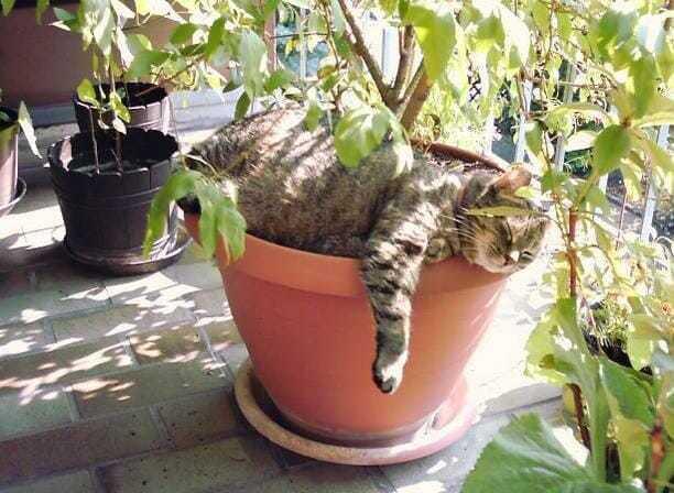 Как защитить цветы от кошки дома - список методов
