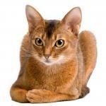 Нематоды у кошек - фото, лечение, симптомы, типы