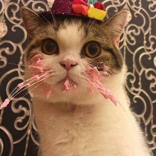 Корм для кошек с почечной недостаточностью - список