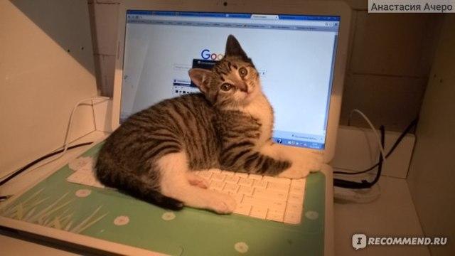 ТОП 6 методов как приучить котенка к имени