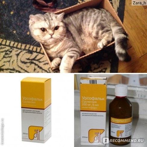 Урсофальк для кошек - инструкция по применению препарата