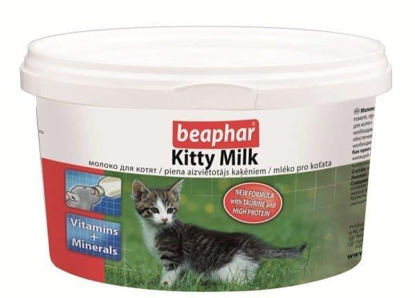 Как выкормить котенка без кошки в домашних условиях - схема кормления