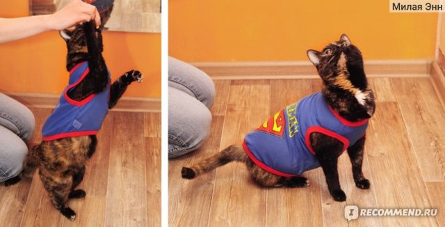 Как приучить месячного котенка к лотку без нервов