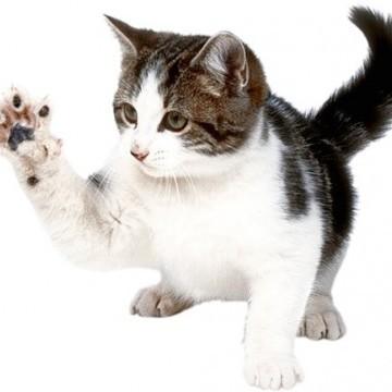 5 причин почему котенок кусает руки - как отучить
