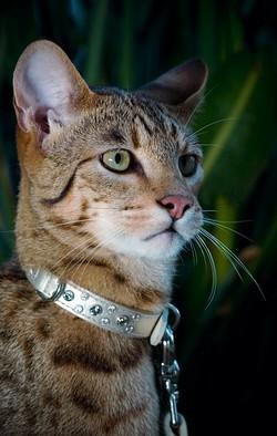 Имена и клички для кошек девочек