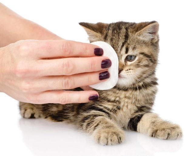 У кошки коричневые выделения из глаз - причины и лечение