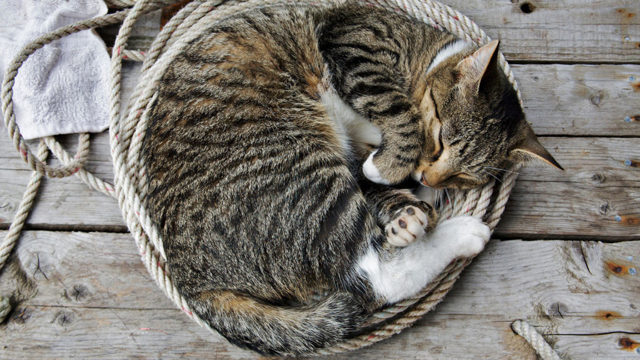 Кошка лижет руки хозяина - причины, как отучить