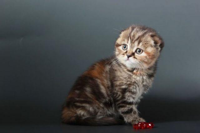 Как выбрать котенка для дома - на что нужно обратить внимание