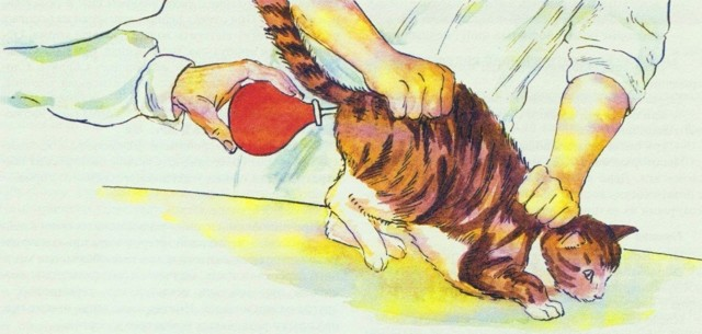 9 причин запора у котенка - симптомы, лечение и что делать