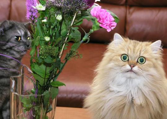Кошка ест цветы - причины и что делать