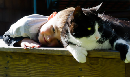 Можно ли заразиться глистами от кошки и как