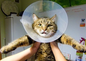 Фунгин спрей для кошек - инструкция по применению